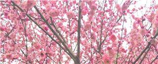 又是一年春暖花开