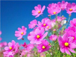 花为春寒泣