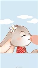 兔子HHH