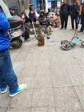 猴子表演杂耍