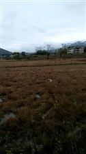农村整合基本农田荒芜无法流转该怎办?
