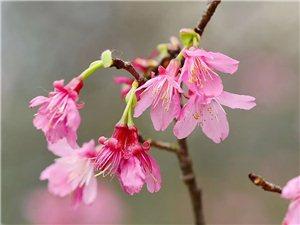春暖花�_季