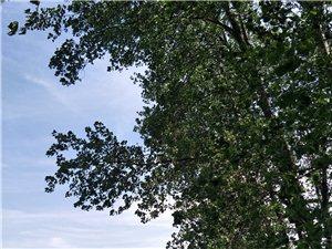 树铺天荫盖地危机四伏