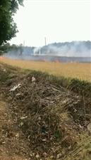 同城爆料:今天下午在汝州花海路上大片麦田被火烧