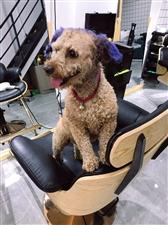 同城爆料:寻狗!5月21日下午在汝州市广育路体育场丢失一只狗狗
