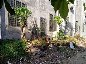 儋州市这条街道应该改造了!