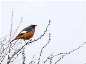 《初冬,老虎沟拍鸟打游鸡》