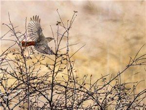 爱鸟护鸟,做文明市民。