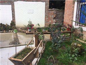 打造绿色清新生活