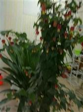 可爱的花市