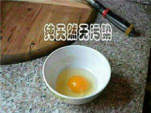 初生蛋的营养价值