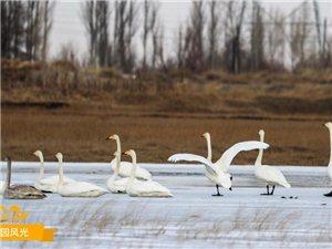嘉峪关新城草湖越保护野生动物越不来了