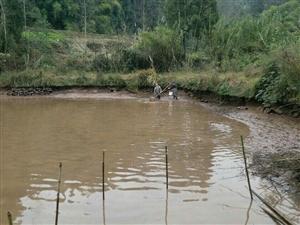 邀约安岳在线网友参加户外活动,去城西农民哥哥家捞鱼
