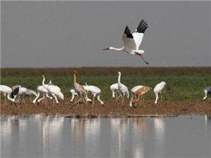 鄱阳湖观候鸟一日游