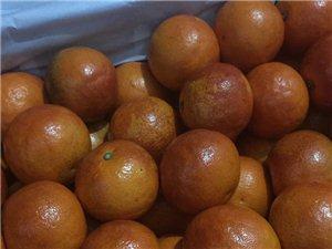 庄河批发血橙子