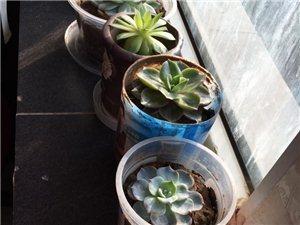 我家的多肉植物