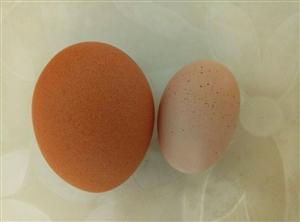 四招教你辨别土鸡蛋