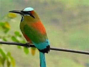 美丽的花鸟摄影欣赏