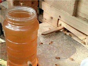 长阳纯天然土蜂蜜
