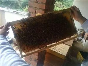 自己家打的蜂蜜。