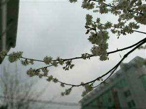 松桃的春天来啦,你发现了吗