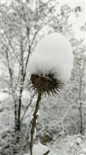 雪花漫天飞舞,凉不过人心