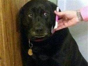 狗狗无视女主人,男主人打来电话呵斥,狗狗表情让人笑翻