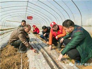 美高梅注册学雷锋农技服务队的志愿者在大新镇府台村农民蔬菜挂起了农事服务联系电话牌子