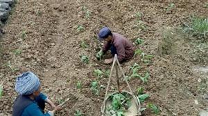 .紧急招工由于农忙