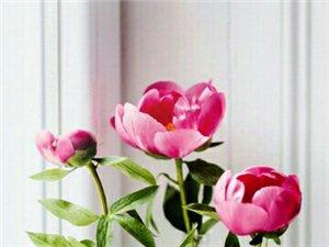 美丽红花,花值千金,天下第一美