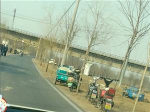 三河湖镇镇政府为了绿化面子工程大肆破坏?#30331;?#30340;麦田