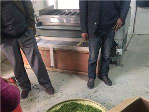 大悟茶葉加工,銷售各類茶葉