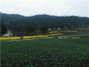 乡村风景,自然之美,