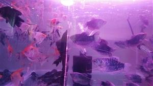 乐友渔具新进热带鱼