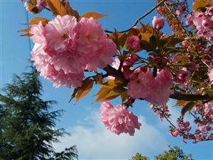 白云,蓝天,鲜花,心情爽吗!