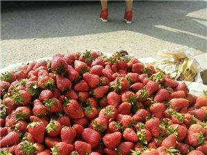 可爱爽口的草莓