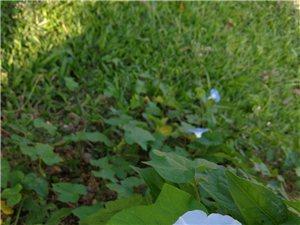 南茶公园景色