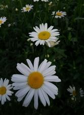 我们的祖国是花园,花园里花朵真鲜艳……