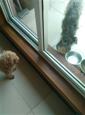 同样叫狗,待予不同一个室外一个室内,上哪