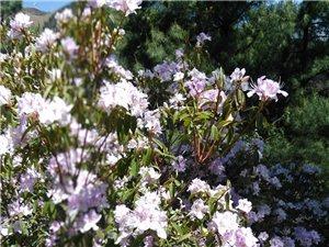 我们村头上老沟头的花。