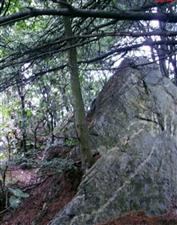 汉王山,原始森林,山青水秀,夏天最好的去