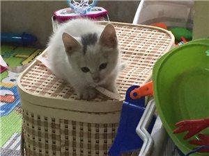 雪白小貓咪尋找主人