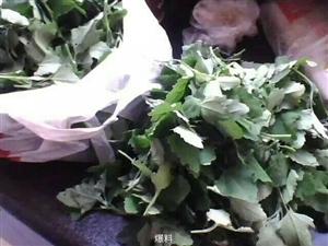 澳门牌九平台到处都是的野菜----灰灰菜