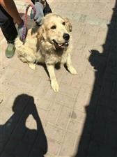 2017年6月23日上午齐齐哈尔市小动物