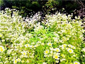 清纯的花花草草