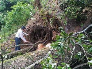 2017年7月2日,清晨高梅村高梅至何家路段滑坡一兜枯古树横在路中间那一刻。村民自发清理路障。
