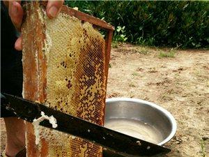 自家产的中蜂蜂蜜