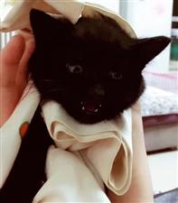 寻猫启事北城枫景西区附近必有重谢??
