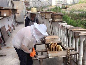 一年一产谷花蜜,农家土蜂蜜,量大从优