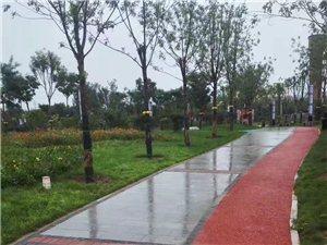 雨中中兴公园(刘梓嘉摄)